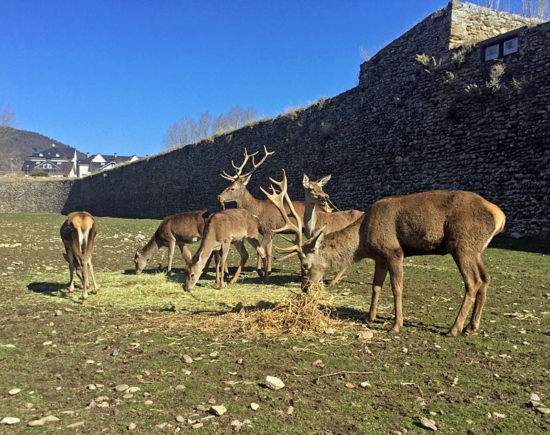 Manada ciervos