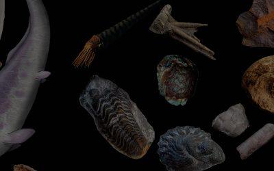 """La exposición """"Especies. Toda la historia del Pirineo a través de sus fósiles"""" estará disponible hasta enero de 2019"""