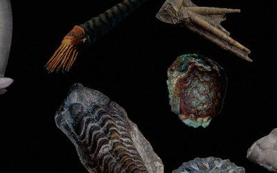 La exposición de fósiles de la Ciudadela de Jaca amplía sus fechas
