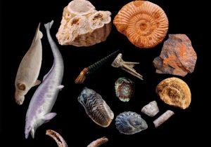 """Exposición """"Especies. Toda la historia del Pirineo a través de sus fósiles"""" @ Ciudadela de Jaca"""