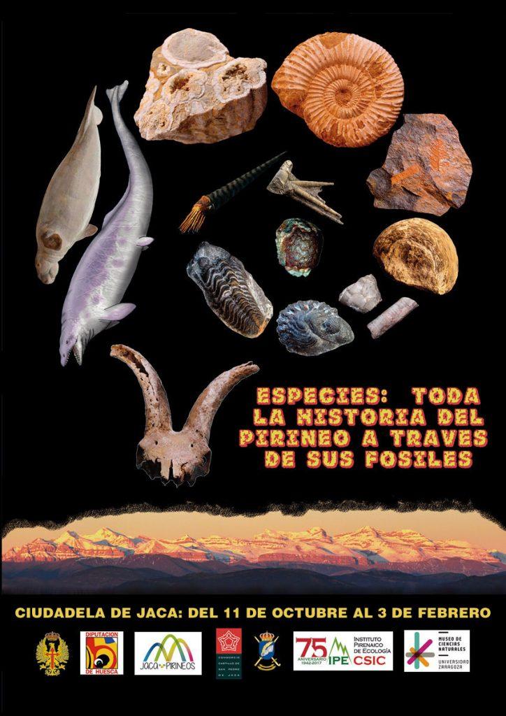 """Exposición """"Especies. Toda la historia del Pirineo a través de sus fósiles"""""""