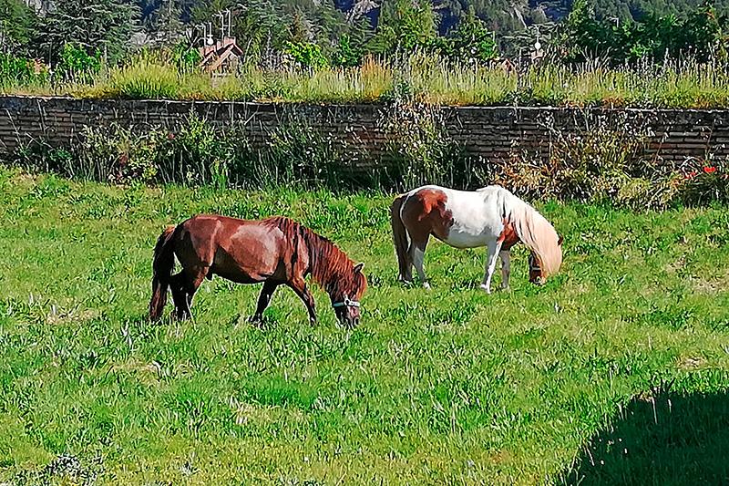 Los ponys Frodo y Sam, una solución sostenible y ecológica para las zonas verdes de la Ciudadela