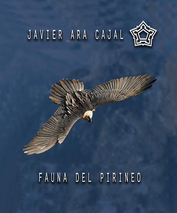"""Exposición """"Fauna del Pirineo"""". Javier Ara"""